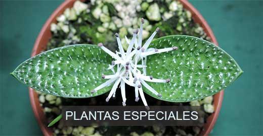 plantas especiales